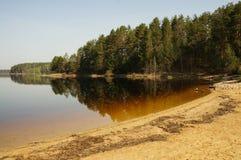 Παραλία στη λίμνη του δάσους στοκ εικόνες