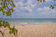 Παραλία στη Μαρτινίκα, Grande Anse des Salines Στοκ Φωτογραφία