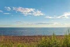 Παραλία στο επαρχιακό πάρκο αμμόλοφων κέδρων Στοκ εικόνα με δικαίωμα ελεύθερης χρήσης