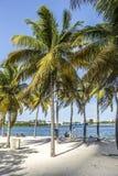 Παραλία στο στο κέντρο της πόλης Μαϊάμι στοκ εικόνες με δικαίωμα ελεύθερης χρήσης