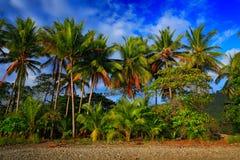 Παραλία στο τροπικό νησί Σαφείς μπλε νερό, άμμος και φοίνικες Όμορφο σημείο, επεξεργασία και aquatics διακοπών καρύδων αναδρομικό Στοκ φωτογραφίες με δικαίωμα ελεύθερης χρήσης