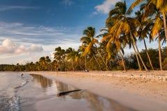Παραλία της Άγιος-Anne, Μαρτινίκα Στοκ εικόνες με δικαίωμα ελεύθερης χρήσης