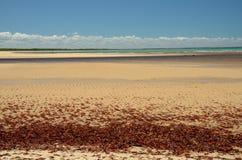 Παραλία της Βραζιλίας Στοκ Εικόνες