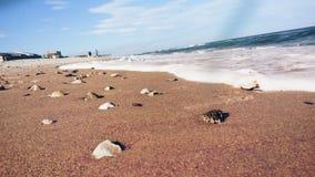 Παραλία της βόρειας Καρολίνας Στοκ Φωτογραφία