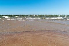 Παραλία της θάλασσας της Βαλτικής με τους βράχους και το παλαιό ξύλο Στοκ Εικόνες