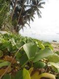 Παραλία της Σρι Λάνκα Στοκ φωτογραφία με δικαίωμα ελεύθερης χρήσης