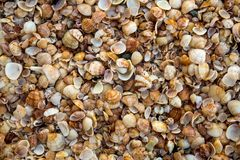 Παραλία της Shell Στοκ φωτογραφία με δικαίωμα ελεύθερης χρήσης