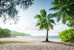 Παραλία του Λάτσιο Anse, νησί Praslin Στοκ εικόνες με δικαίωμα ελεύθερης χρήσης