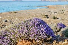 Παραλία του νησιού Creta Στοκ Εικόνες