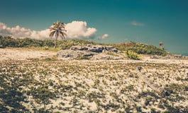 Παραλία του Playa del Carmen, Μεξικό Στοκ εικόνες με δικαίωμα ελεύθερης χρήσης
