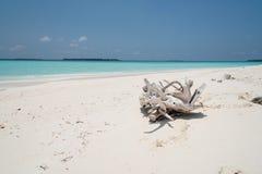 Παραλία των Μαλδίβες στοκ φωτογραφία