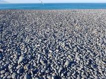 Παραλία χαλικιών και seagull Στοκ Φωτογραφία