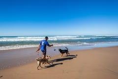 Παραλία χρόνου ψυχαγωγίας σκυλιών ατόμων Στοκ εικόνα με δικαίωμα ελεύθερης χρήσης