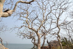 Παραλία Gokarna στοκ φωτογραφίες