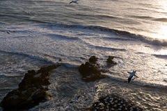 Παραλία Muriwai Στοκ φωτογραφία με δικαίωμα ελεύθερης χρήσης