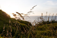 Παραλία Muriwai Στοκ εικόνες με δικαίωμα ελεύθερης χρήσης
