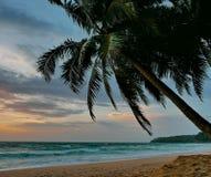 Παραλία Phuket ηλιοβασιλέματος φοινικών Στοκ Φωτογραφίες