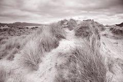 Παραλία Rossbeigh, ιρλανδική αγελάδα κομητειών  Στοκ Φωτογραφία
