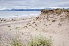 Παραλία Rossbeigh, ιρλανδική αγελάδα κομητειών  Στοκ φωτογραφία με δικαίωμα ελεύθερης χρήσης