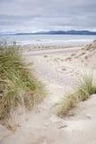 Παραλία Rossbeigh, ιρλανδική αγελάδα κομητειών  Στοκ εικόνα με δικαίωμα ελεύθερης χρήσης