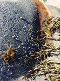 Παραλία thea του OM φυκιών Στοκ Εικόνα