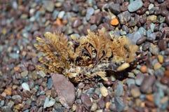 Παραλία Tumbleweed στοκ φωτογραφία