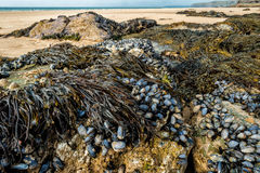 παραλία whipsiderry στοκ εικόνα