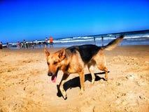 Παραλία Wildernis Στοκ φωτογραφία με δικαίωμα ελεύθερης χρήσης