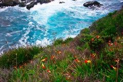 Παραλία Wildflowers Στοκ Φωτογραφία