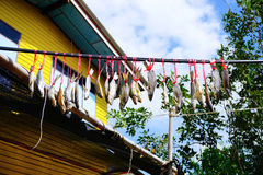 Παραδοσιακά υπαίθρια ψάρια που ξεραίνουν στο σχοινί σπιτικά αποξηραμένα ψάρια Στοκ φωτογραφίες με δικαίωμα ελεύθερης χρήσης