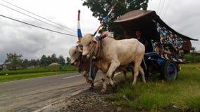 Παραδοσιακές μεταφορές της Ιάβας στοκ εικόνα