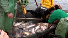 Παραδοσιακή αλιεία απόθεμα βίντεο