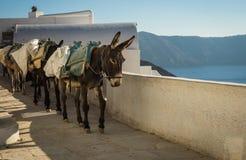 Παραδοσιακοί ελληνικοί γάιδαροι Oia στο νησί Santorini στην Ελλάδα Στοκ Εικόνες