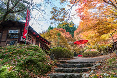 Παραδοσιακό κατάστημα πρόχειρων φαγητών κάτω από τα φύλλα φθινοπώρου, Κιότο, Ιαπωνία Στοκ Εικόνες