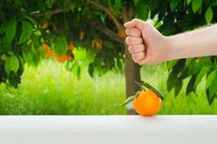 Παραδώστε πορτοκαλιά φρούτα στο υπόβαθρο του πορτοκαλιού δέντρου Στοκ Φωτογραφίες