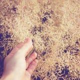 Παραδώστε τη χλόη φθινοπώρου στοκ φωτογραφία με δικαίωμα ελεύθερης χρήσης