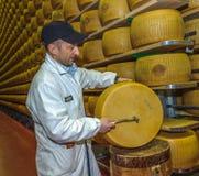ΠΑΡΜΑ, ΙΤΑΛΙΑΣ - 10 Μαρτίου, 2014: Ποιοτική δοκιμή τυριών παρμεζάνας Στοκ Φωτογραφία
