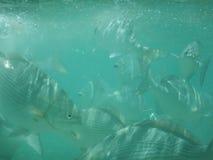 Παροξυσμός ψαριών στοκ εικόνες