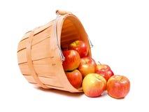 παρουσίαση μήλων Στοκ Φωτογραφία