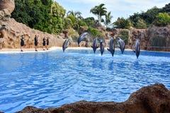 Παρουσιάστε με τα δελφίνια στοκ φωτογραφία με δικαίωμα ελεύθερης χρήσης
