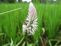 Παρουσιάστε λουλούδι Στοκ Φωτογραφία