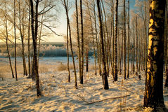 παρουσιασμένο χειμερινό  Στοκ Εικόνα