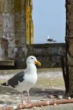 Παρόντες κάτοικοι Alcatraz Στοκ φωτογραφία με δικαίωμα ελεύθερης χρήσης