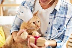Παρόν για τη γάτα στοκ εικόνα