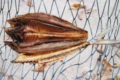 Παστά ψάρια Στοκ εικόνες με δικαίωμα ελεύθερης χρήσης