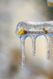 πασχαλιά πάγου κλάδων Στοκ Εικόνα