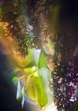 πασχαλιά Στοκ εικόνα με δικαίωμα ελεύθερης χρήσης