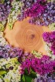 Πασχαλιές των διαφορετικών χρωμάτων στο ξύλινο υπόβαθρο Στοκ εικόνες με δικαίωμα ελεύθερης χρήσης