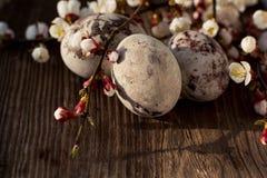 Πασχαλινά χρωματισμένα αυγά στο σκοτεινό ξύλινο υπόβαθρο με το άνθισμα brunches στοκ φωτογραφίες