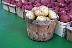 πατάτα επιλογών Στοκ Φωτογραφία